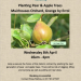 Planting Pear & Apple Trees on Wednesday 8th April
