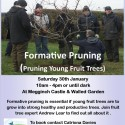Orchard Skills Training – Formative Pruning