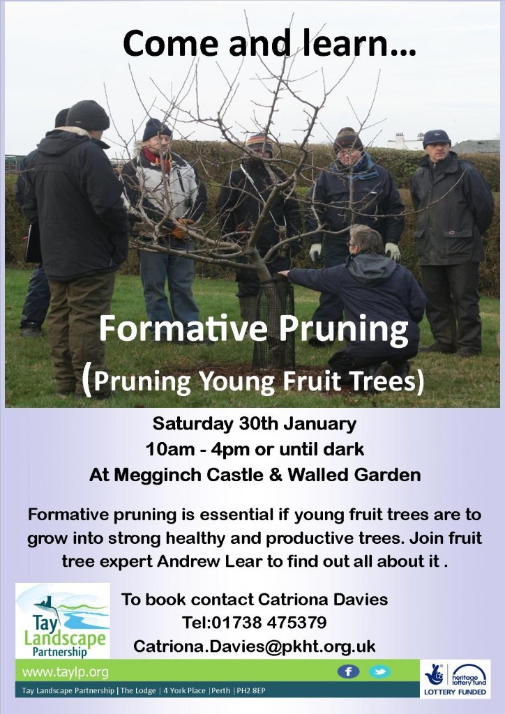 Formative Pruning, Megginch mk 3