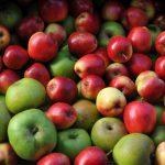 Apples (c) TayLP
