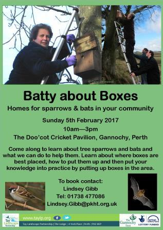 Batty about Boxes!