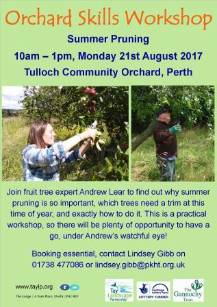 Summer Pruning – Orchard Skills Workshop